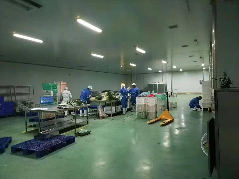 淨菜加工廠前道分選及包裝